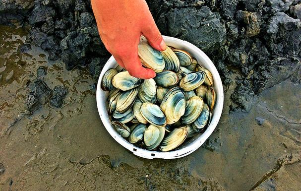 Dig and Dine on Nova Scotia's Eastern Shore | Canada Select